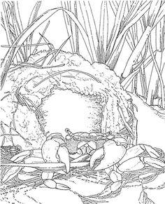 imagen Un cangrejo y su casa