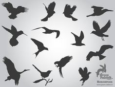 Free Flying Birds Silhouettes Vector Images | Download Free Animals Vector Graphics