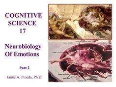 Neuroscience of Emotions Ovarian Follicle, Anterior Cingulate Cortex, Corpus Callosum, Limbic System, White Matter, Conceptual Framework, Self Organization, Traumatic Brain Injury
