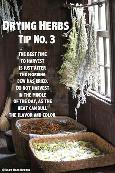 Drying Herbs: Tips for Preserving Your Garden Herbs More At FOSTERGINGER @ Pinterest