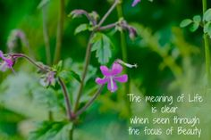 A moment of wisdom from Mana Gardens Meaning Of Life, Meant To Be, Gardens, Wisdom, Inspirational, In This Moment, Words, Plants, Image