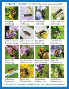 Gardening for the Bees, and Why it's a Good Thing Benjamin Vogt / Monarch Gardens Landscape Architects & Designers