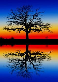 mirror image tree