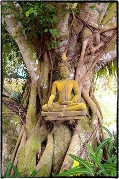 """""""Sometimes it is better to react with no reaction.""""   * Buddha enlightenment   <3 lis"""