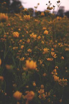 """""""My garden is my most beautiful masterpiece"""" ― Claude Monet"""