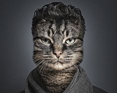sebastian magnani swaps felines with their owners for undercats