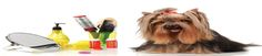 MK Dog Grooming is the leading dog groomers in Milton Keynes, Newport Pagnell and surrounding villages like Hanslope, Castlethorpe, Hartwell, Haversham, Cosgrove and Wolverton. We love to pamper dogs by dog walking, hair cutting, nail clipping ,dog bathing and all things that dogs love to make them happy! Visit http://mkdoggrooming.com/