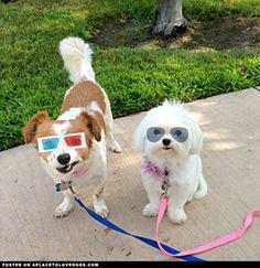 Kewl pups
