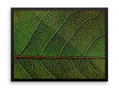 Leaf Photography Print | Wall Art | Macro | Nature | Botanical Art | Cheap Art Prints | Large Wall Art | Gift Ideas for Her | Plants | Green