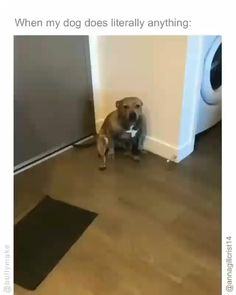 Funny Dog Videos, Funny Animal Memes, Dog Memes, Cute Little Animals, Cute Funny Animals, Funny Cute, Cute Animal Videos, Cute Animal Pictures, Silly Dogs