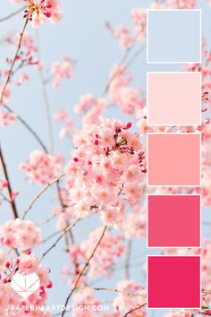 Spring Cherry Blossom Color Palette Blush Pink + Baby Blue, Shades of Pink Color Scheme, Color Palette: Spring Cherry Blossoms — Paper Heart Design color Color Schemes Colour Palettes, Spring Color Palette, Pink Palette, Pastel Colour Palette, Colour Pallette, Spring Colors, Pastel Colors, Color Combos, Colours