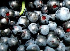 jagodowy robaczek / bilberry maggot