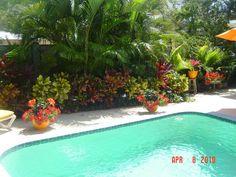 Colorful foliage around pool