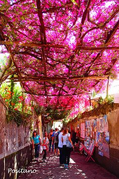 Italy---art and flowers