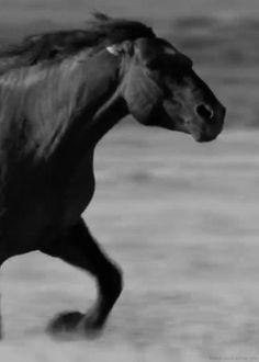 Pour vous qui aimez les chevaux ...