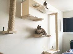 Cat Sky Track van CatastrophiCreations op Etsy