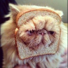 lol crusty cat
