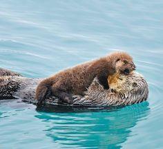 Mom and baby otter by Tom and Pat Leeson/ardea.com via http://unmundoenpaz.blogspot.com.ar/2013/04/amor-animal-fotos.html#more