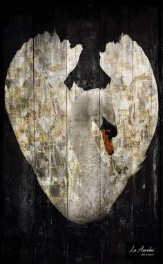 """""""Royal Wings"""" Photo Art uit de serie 'DUTCH DREAMS' van La Aurelia. – Formaat: 66,5 x 41 cm – Fineart Giclée print geplakt op houten paneel – Voorzien van een UV werend vernis – Gesigneerd #photoart #swan #zwaan #royal #wings #dutch #jewels #light #fineart #art #laaurelia #dutchdreams"""