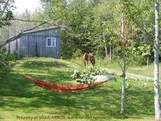 Horse Farm  For Sale in Nova Scotia