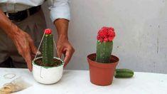 Resultados de los cactus injertos 2