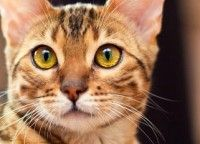 i love CAT EYES ;-))))
