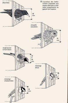 Wooden Bird Houses, Bird Houses Diy, Bird House Feeder, Bird Feeders, Backyard Projects, Garden Projects, Bird House Plans Free, Homemade Bird Houses, Plantas Bonsai