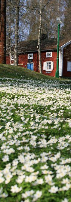 Spring in Nässjö, Småland, Sweden