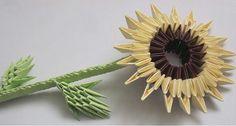 گل آفتابگردان Sunflower