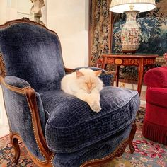 """The resident at a legendary setting for the authentic celebration of the French """"art de vivre"""". Le Bristol Paris, Hotel Bristol, Wingback Chair, Armchair, Hotel Concierge, Paris Hotels, Travel And Leisure, Strike A Pose, French Art"""