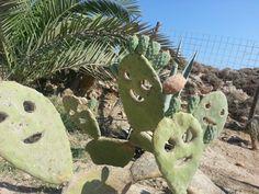 Smiling cactus