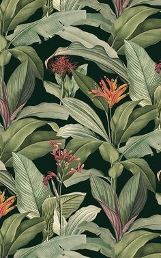 Introduce a more sophisticated take on tropical design to your space, with this exotic tropical wallpaper in green tones. Vintage Wallpaper, Zebra Wallpaper, Wallpaper Wall, Wallpaper Free, Tropical Wallpaper, Botanical Wallpaper, Pattern Wallpaper, Victorian Wallpaper, Motif Tropical