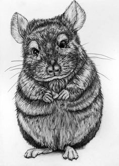 Chinchilla Pencil Drawing Original 64 Chinchilla by rachelledyer