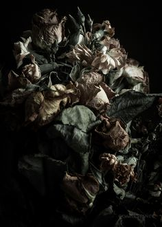 DECAYING FLOWERS - DARIA STANEK
