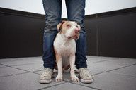 THIS WILD IDEA - great audio stories w/ rescue pet owners