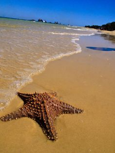 Starfish in the sand at waters edge Moreton Island, Brisbane Australia http://maloufdental.com.au/