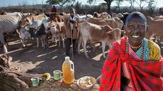 All You Can Eat: A Round-the-World Photo Tour of People, their Food, and their Calories per Day maasai-diet What The World, All Over The World, People Around The World, Around The Worlds, Wild Elephant, People Poses, Photography Series, Documentary Photography, World Photo