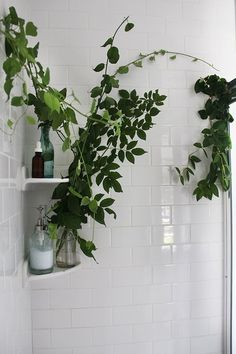Turning Your Shower Space Into A Sanctuary | Free People Blog #freepeople