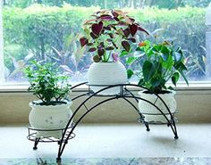AISHN Elegant Arch Design Black Metal Plant Stand Flower Pots Shelf Unit Decorative Planter Stand with 3 holders Potted Plant Rack Organizer Black * Be sure to check out this awesome product. Plant Stand With Wheels, Metal Plant Stand, Diy Plant Stand, Balcony Herb Gardens, Indoor Flower Pots, Wrought Iron Decor, Pot Plante, Decorative Planters, Garden Decor Items