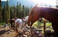 Horse Riding Holidays in Canada - Unforgettable adventures in Canada, crafted especially for your family www.triptoes.com