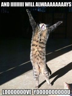 Fun Claw - Funny Cats, Funny Dogs, Funny Animals: Funny Pictures Of Cats - 20 Pics