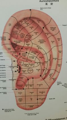 Shiatsu Massage – A Worldwide Popular Acupressure Treatment - Acupuncture Hut Acupuncture Points Chart, Acupressure Points, Acupressure Therapy, Alternative Health, Alternative Medicine, Reflexology Massage, Holistic Healing, Massage Therapy, Traditional Chinese Medicine