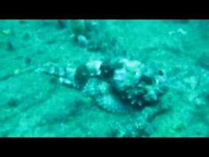 SCUBA Diving the USS Mizpah in West Palm Beach, Florida - http://www.florida-scubadiving.com/florida-scuba-diving/scuba-diving-the-uss-mizpah-in-west-palm-beach-florida/