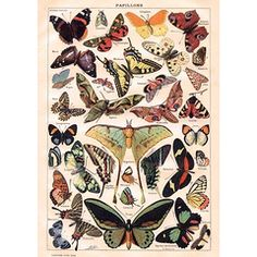 Lovely vintage botanical victorian butterfly poster print art A2-getting this