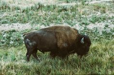 Rise and Shine Photos) - Suburban Men New Americana, Vintage Soul, How To Wake Up Early, Mornings, Wild Things, Man Photo, Bison, Sunrise, Creatures
