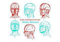 Schematizzazione muscolatura facciale.