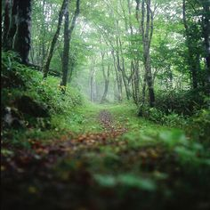 Don't stray too far from forest path for you might find more than you bargained for.