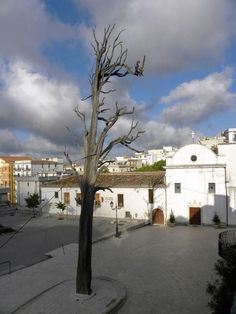 L'albero capovolto di San Francesco ad Ischitella | Viaggi e vacanze in Puglia | Scoop.it