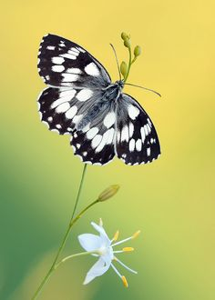 Delicate and graceful