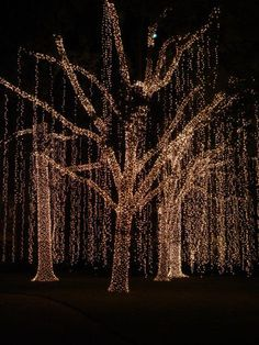 Diy how to wrap a tree in lights pinterest led christmas forest of lights in houston tx but where would you plug it all in aloadofball Image collections